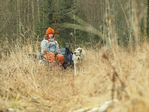 С охотничьей собачкой