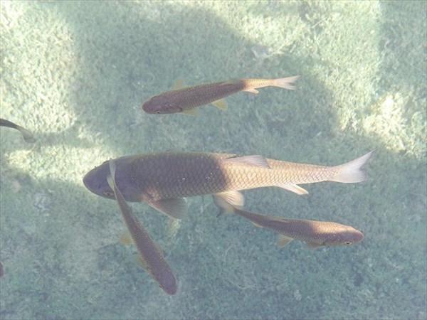 038-Озера-рыбы-2