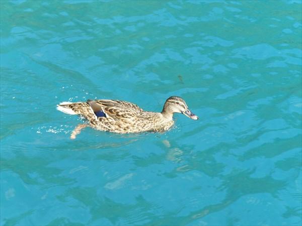 048-Озера-утка