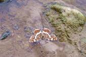 бабочка водоплавающая :-)