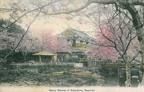 800px-Cherry_Blossom_of_Nakashima_Nagasaki_1912