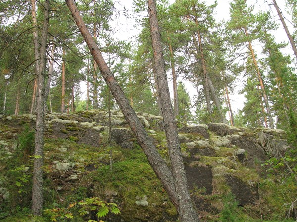 Скалы в лесу