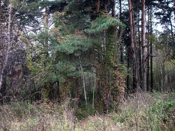 Лесные врата