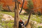 Брайс каньон