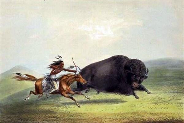 Индейцы и Буйволы в дикой природе