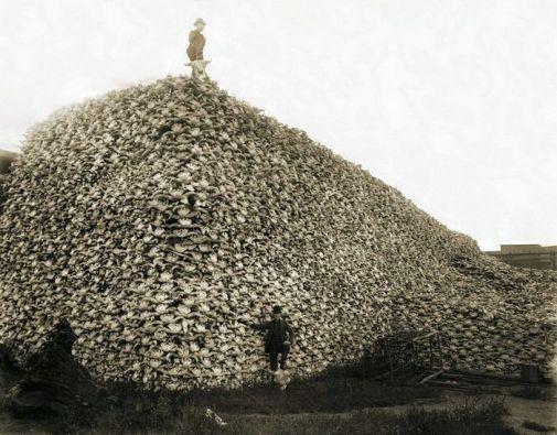 Гора черепов буйволов. 1870