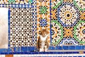 мекнесская кошка