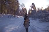 Новогодний конный поход