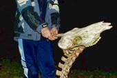 `Победитель динозавров`