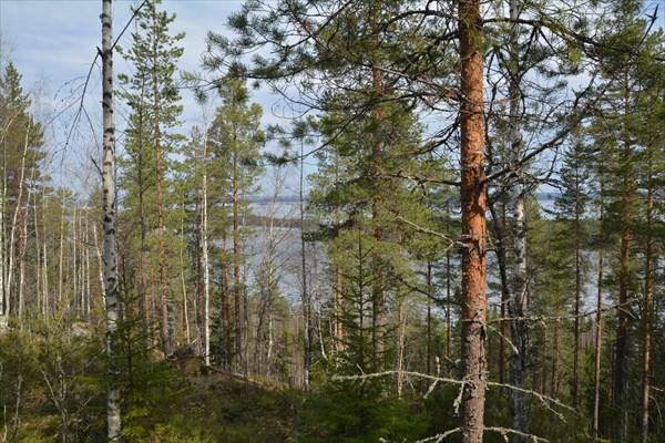 Озеро с дороги видно через деревья