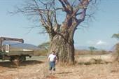 В Долине баобабов