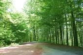 Лесной участок тракта