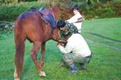лошадь готовят к тяжелой работе