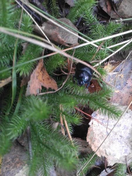 Что за жуки? кто-нибудь знает? пишите в комментарии