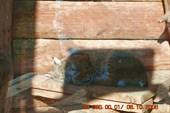 кошки - они и в Африке кошки...