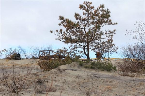 Смотровая площадка среди дюн