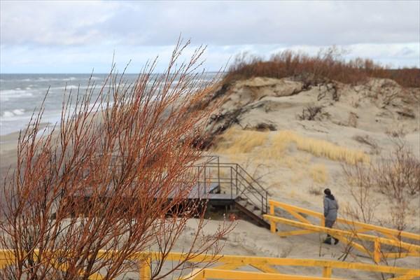 Отвоеванная у дюн растительность
