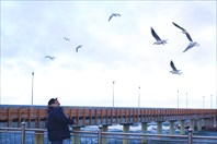 Пирс и чайки