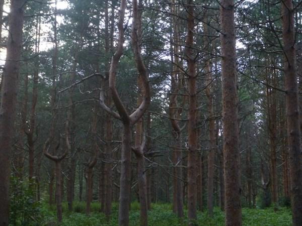 Такой забавный лес