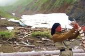 На острове Птичий нашли чей то хребет