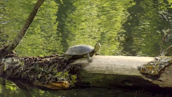 Любимое занятие отдыхающих - считать черепах ))