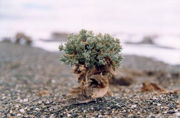 Основная растительность на плато Губайлык [А.Чхетиани]