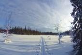 Тропёжка варианта лайт по Аранецким болотам. Фото Сергея Нилова.