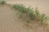 Растения в пустыне