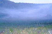 Туман по утру