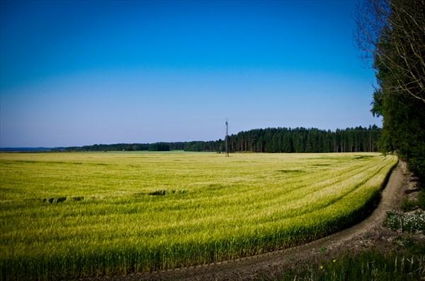 Поля Великого Княжества Финляндского :)