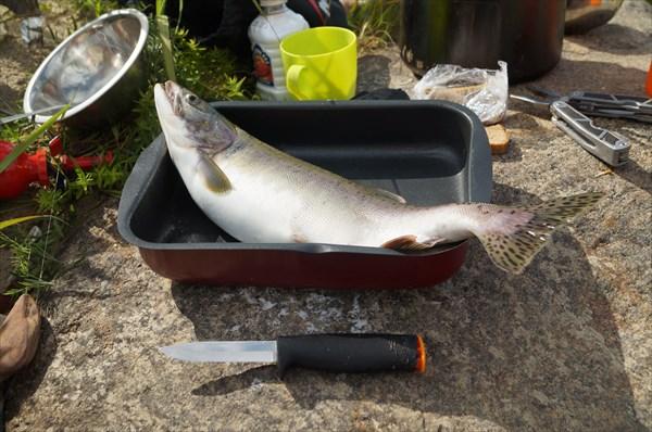 Хорошего размера рыбка.. без головы и хвоста  - поместится )