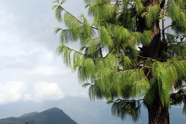 Nepal100_IMG_0100