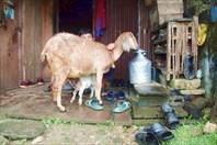Nepal121_IMG_0121