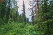 Долина Куприяновского ручья