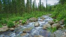 Ручей Двойной  Вид вверх по течению