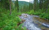 Ручей Двойной  Вид вниз по течению