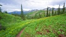 Граница леса перед Караташским перевалом