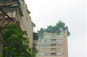 На крышах многих домов растут деревья