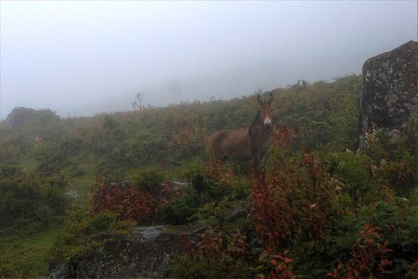 Ослик в тумане