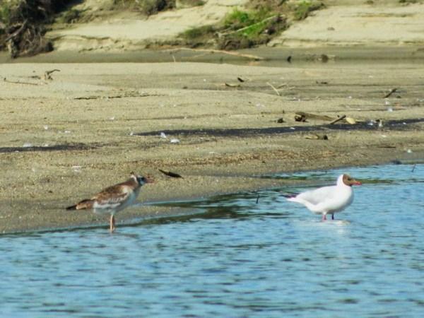 Птицы на берегу.