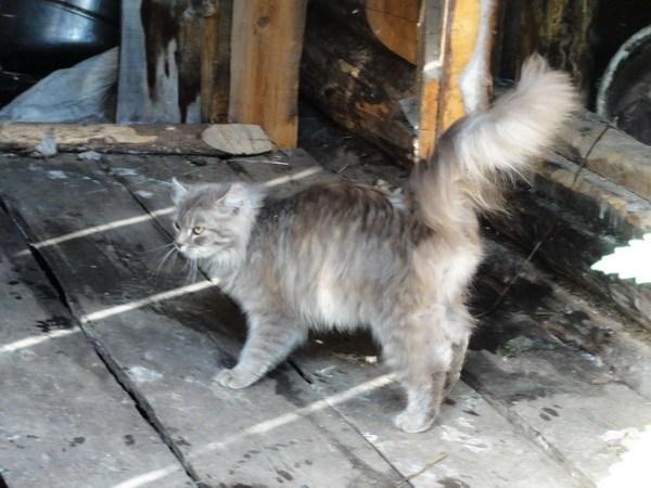 Кошка в Лошках.