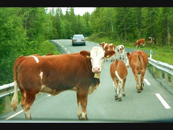 По дороге в Эстерсунд