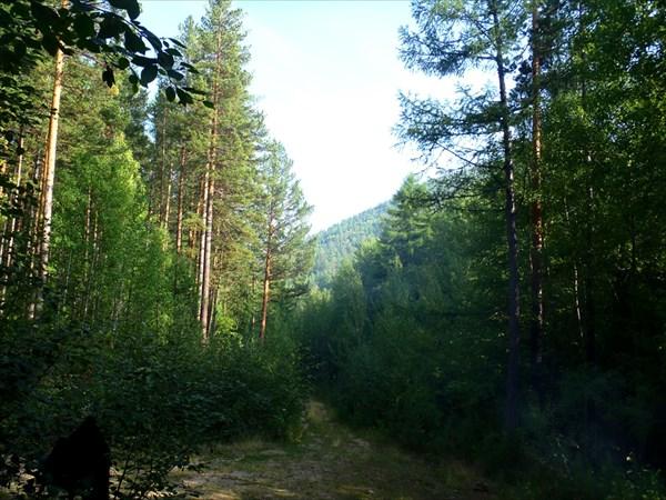 Лесная дорога к началу тропы.