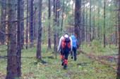 Чем глубже в лес...