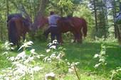 Проводник с лошадьми