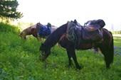 Наши кони