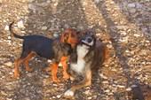 Две собаки и кусочек пластика