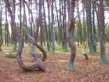 """""""Танцующий лес"""". По одной из версий - там аномальная зона"""