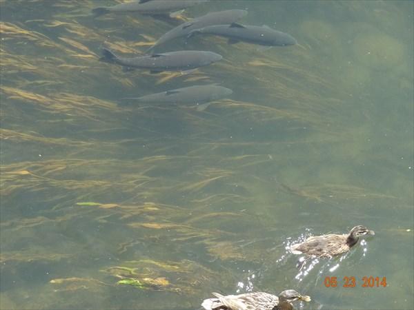 Воды по щиколотку, а рыба есть!