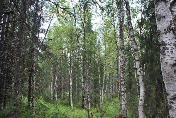 Вот такие леса